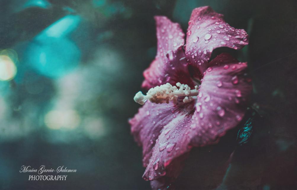 #pink #flower #nature #photography #rain #bloom #fresh