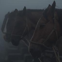 photography house mist fog