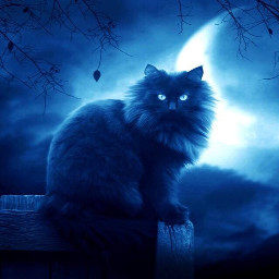 catlover blackcat moon night freetoedit