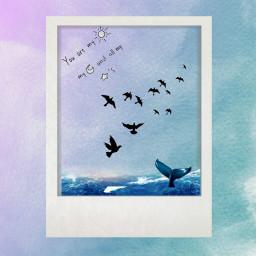 море птицылетят🐦 кит palaroid птицылетят