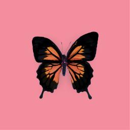 butterflies butterfly pink simple minimal freetoedit