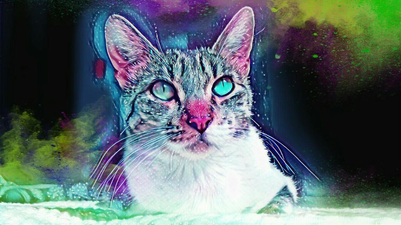 #freetoedit #remix #remixit #cat #catsofpicsart #cateyes #catlovers #catstagram #catholic #catlove