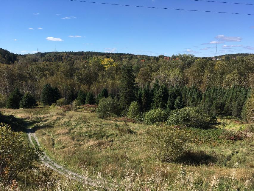 #freetoedit #remixit @picsart #publicdomain #backcountry #trails #forest #quiet #alone