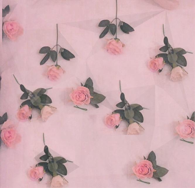 #FreeToEdit #art #nature #summer #roses #pink #picsart