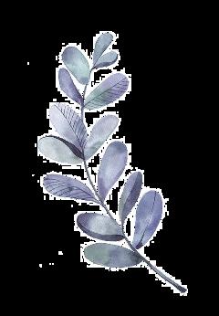 leaves leaf watercolor freetoedit origfte