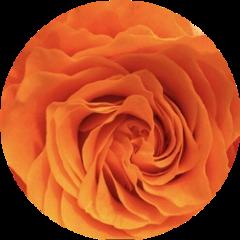 orangeaesthetic aesthetic aestheticsticker orangecircle orange freetoedit