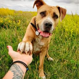 interesting photography dog dogslover photo