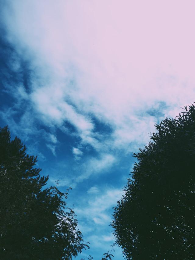 #sky #nature #tree #aesthetic #tumblr #freetoedit