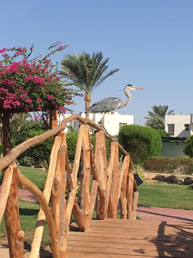 #photography #nature #egypt #sharm_elsheikh_egypt #birds #travel #freetoedit