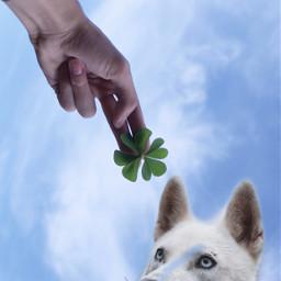 freetoedit doggo