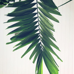 freetoedit green leaves tree white