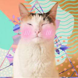 internationalcatday cat kitty kitten awe irccatday freetoedit