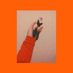 freetoedit aesthetic flower orange arthoeaesthetic