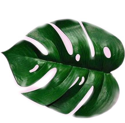 tumblr plant plantsaremyfriends plantsarefriends green