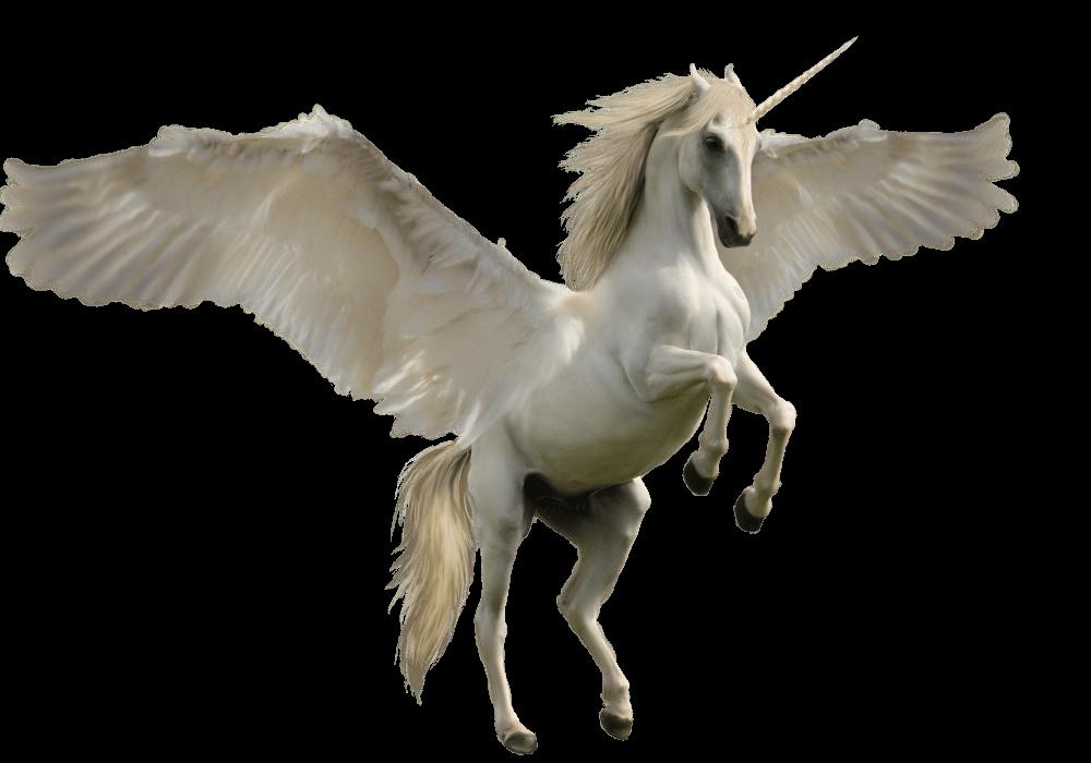 Mq Horse Horses Unicorn Unicorns Wings Wing Fantasy