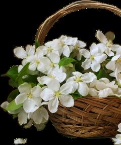 freetoedit remixit flower