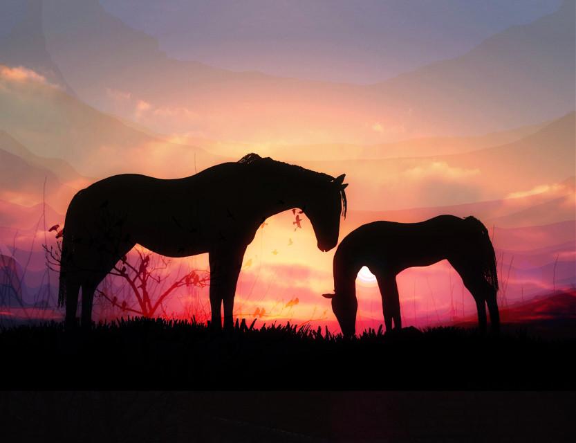#freetoedit #horses #evening #cute #nature