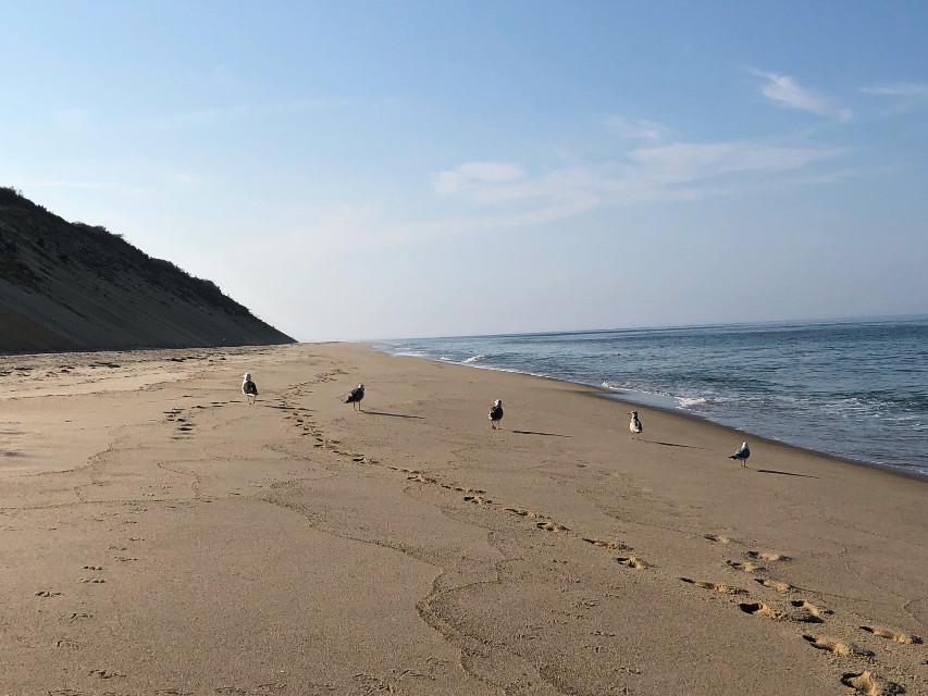 #freetoedit #beach #seagulls #sea #ocean #tracks #footprints #nature