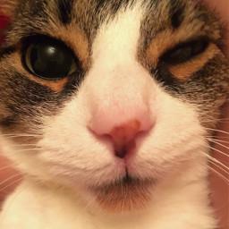 pccats cats