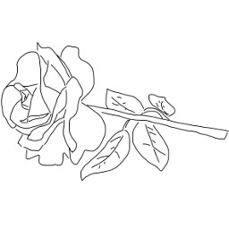 freetoedit rose outline mydrawing remixedit