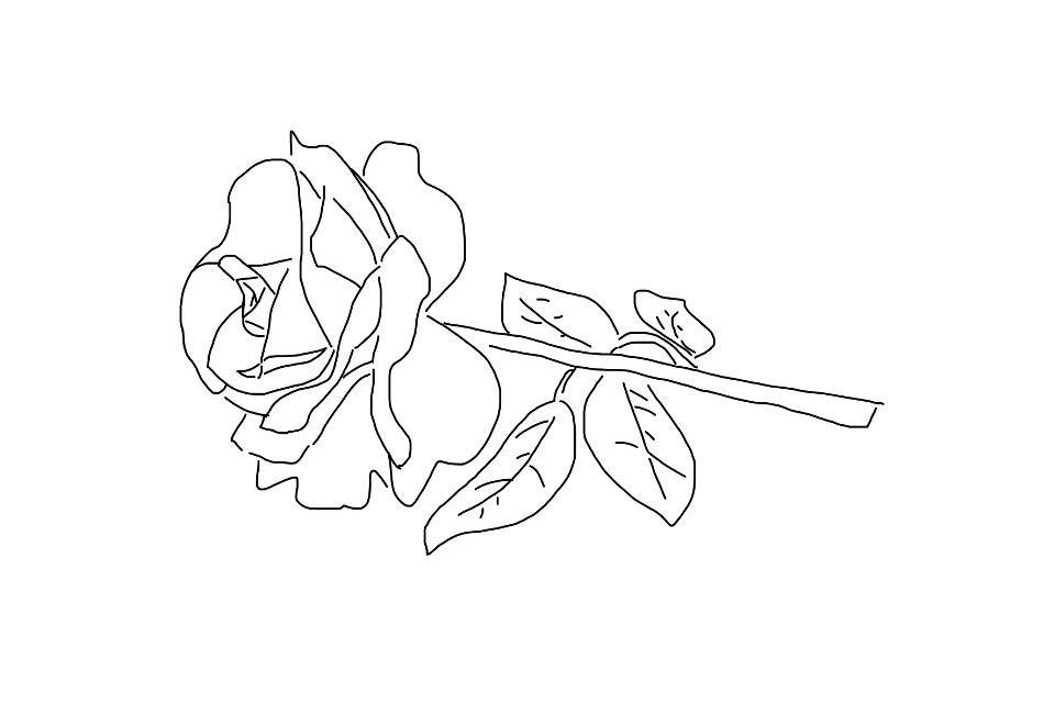 #freetoedit #rose #outline #mydrawing #remixedit #colourme #colorme #red #pink #white #yellow #stem #leaves #thorns #myoriginaldrawing