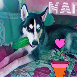 mars kiev2018 dog love