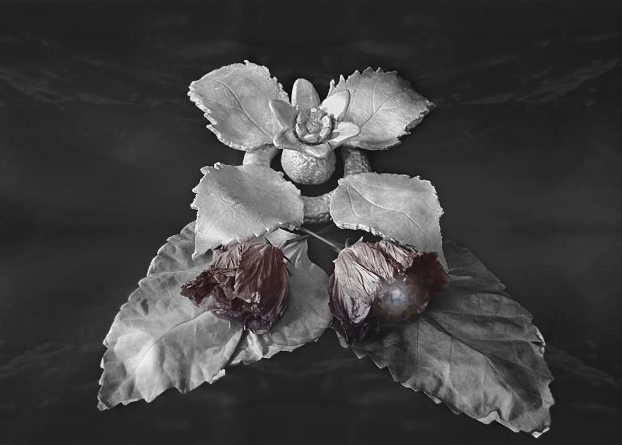 #scenery#handmade#ceramics#leaf#flower#darkart#doubleexposure#