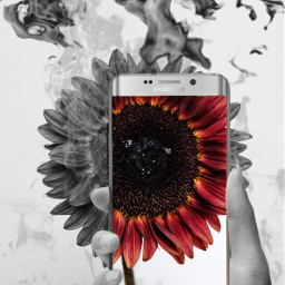 freetoedit destruction flower fire
