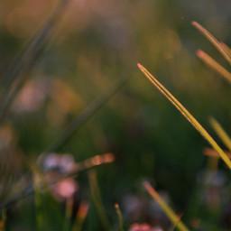 freetoedit nature naturephotography grasshopper light
