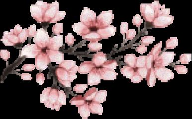 cherryblossom cherrytree japan japanese cherryblossoms