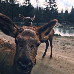 pcworldphotoday worldphotoday ciervos deer deers