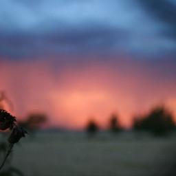 freetoedit camera sunset noedit natural pcthegoldenhour pcworldphotoday
