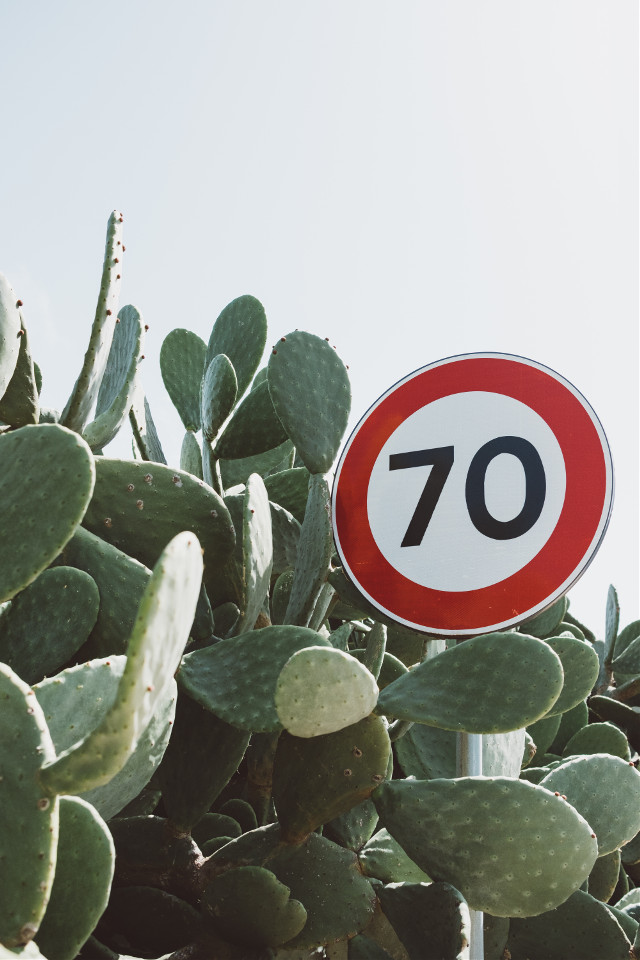 Let your creativity shine! Unsplash (Public Domain) #freetoedit #sing #cactus #traffic #70 #background #backgrounds