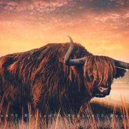 yak myriam70 highlander