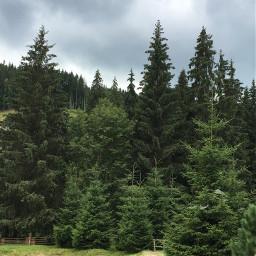photography nature mountains carpathians forest bukovel ukraine freetoedit