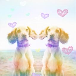 ircdogday dogday freetoedit remix twin