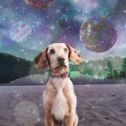 ircdogday dogday freetoedit dog space