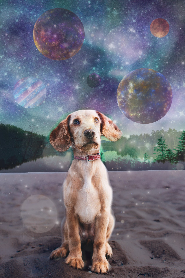 #freetoedit #dog #space #dogsandspace #doglookingintospace