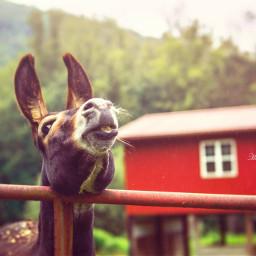 animals animal donkey funny smile