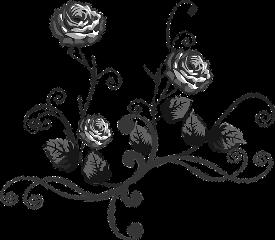 freetoedit sticker stickers rosen roses schwarzwei schwarzweiss