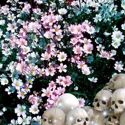 freetoedit flower skull skullhead colorful