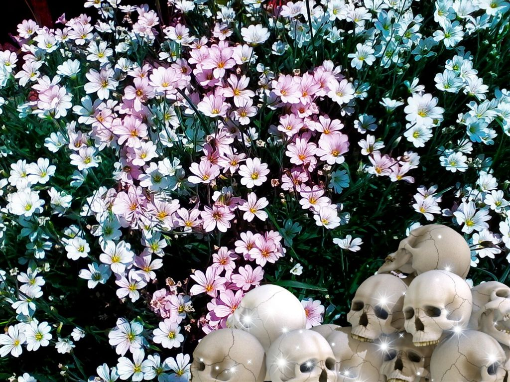 #freetoedit #flower #skull #skullhead #colorful