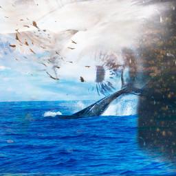 freetoedit whales ocean eyes blue ircwhalestail