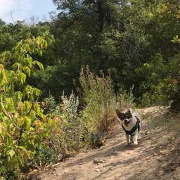 freetoedit hikingadventures littledog heartfamily dogsofpicsart