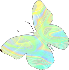 butterfly insect holographic holo colorful freetoedit