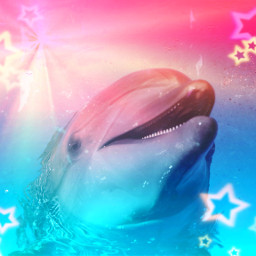 dolphin freetoedit remix