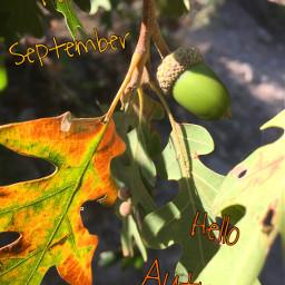september hellofall acorn leaveschanging