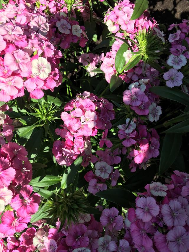 #freetoedit #flowers #remixit #remix #photography #floral