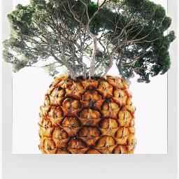 freetoedit remixit pinneapple tree strange