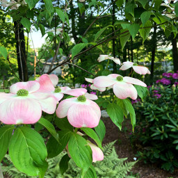 freetoedit floralbackgrounds floralcanvas spring pinkandgreen
